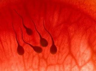 Семяизвержение с кровью и причины состояния у мужчин