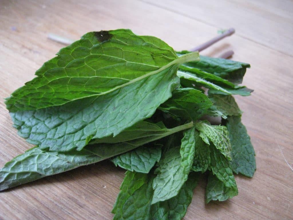 Как мята влияет на потенцию: вред и польза травы для мужского здоровья