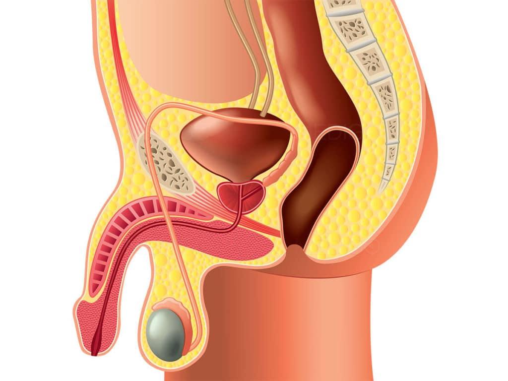 Лигаментотомия и визуальное увеличение члена