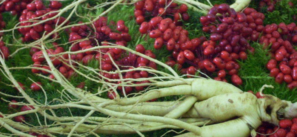 Какие растения помогают при импотенции