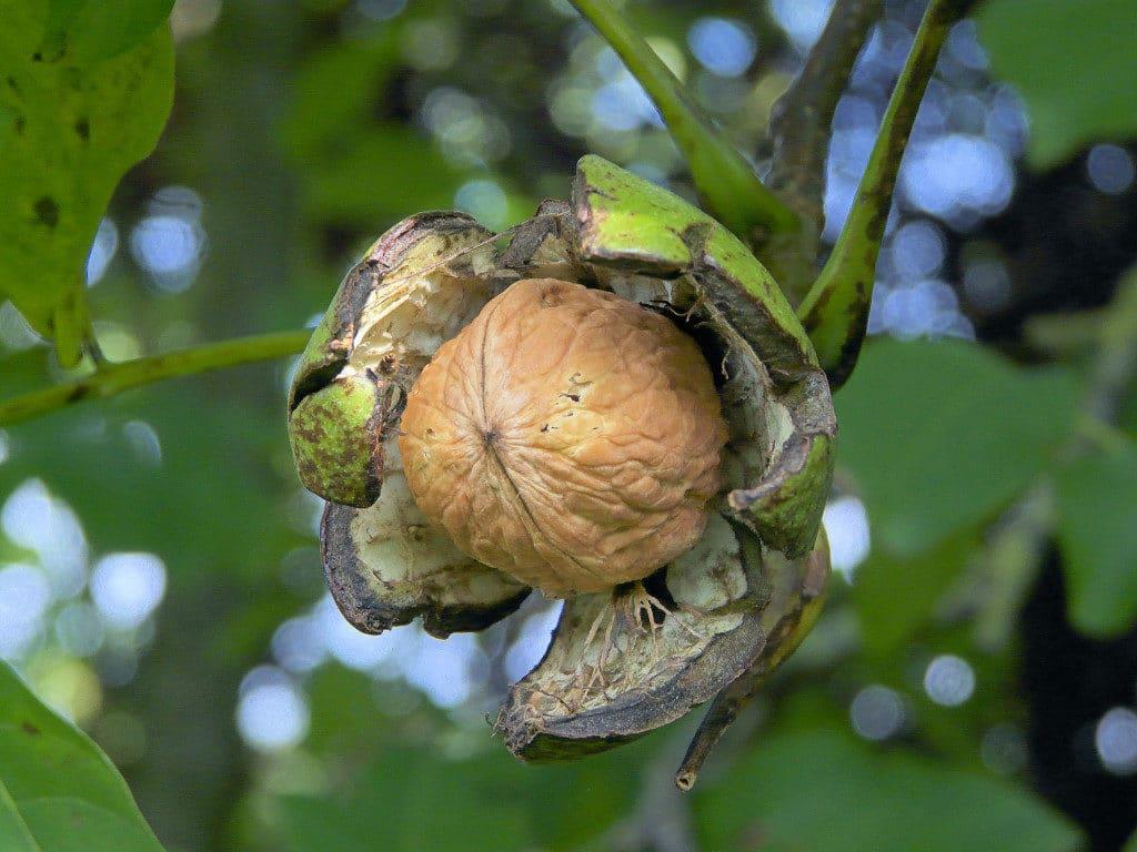 Орехи для потенции у мужчин: как влияют, какие орехи самые полезные, обзор лучших рецептов