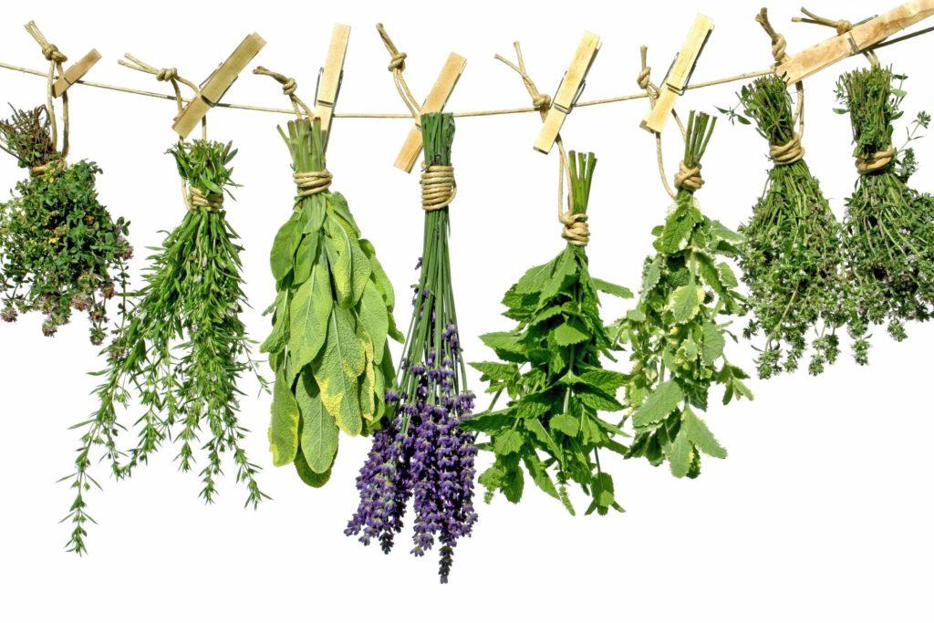 Какие травы помогают мужчинам избавиться от импотенции: рецепты, противопоказания