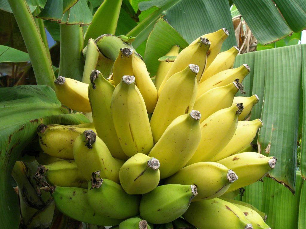 Польза бананов для мужского либидо