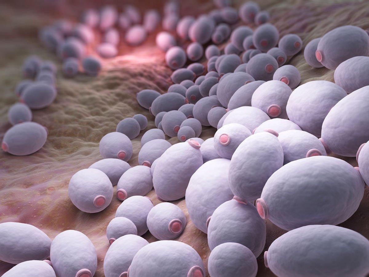 Как развивается инфекционный простатит