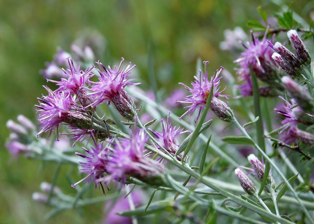 Травы от простатита: как выбрать и заваривать лекарственный сбор