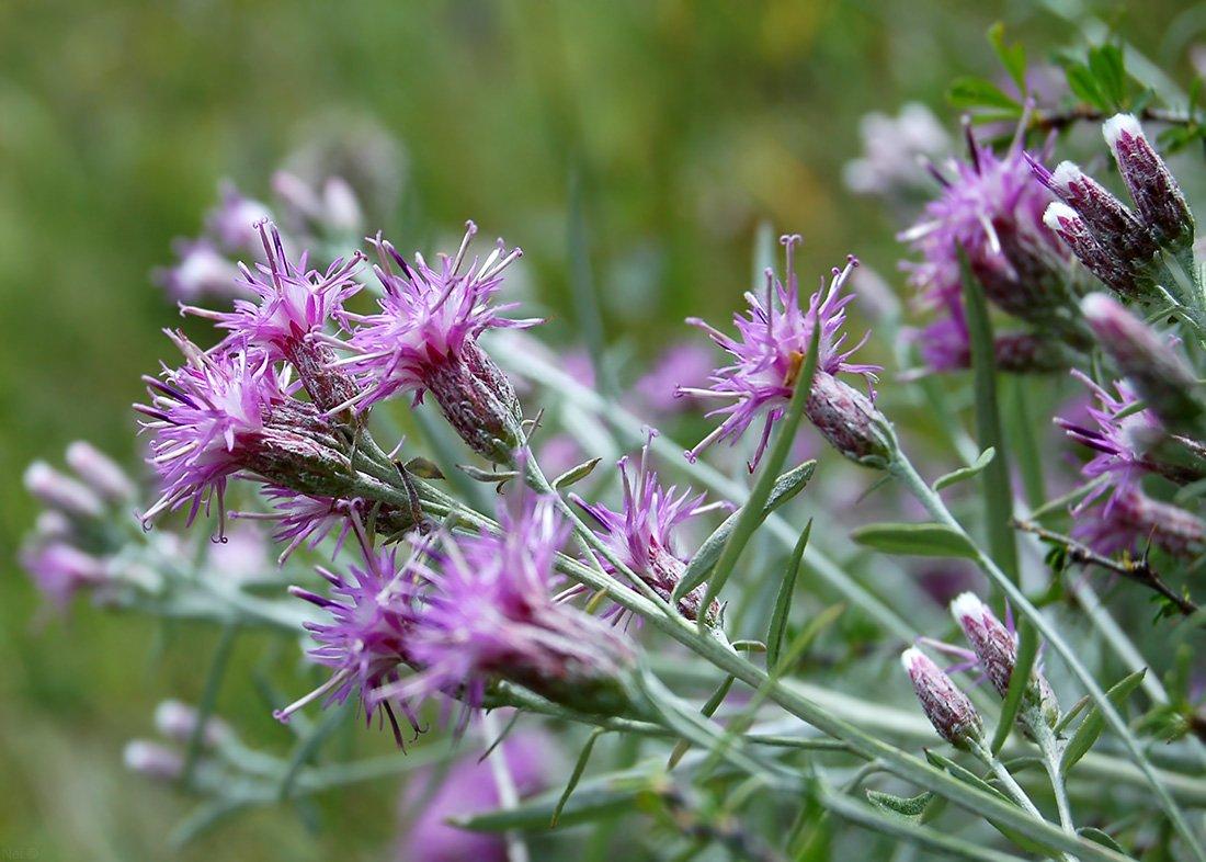 Лечебные травы от простатита